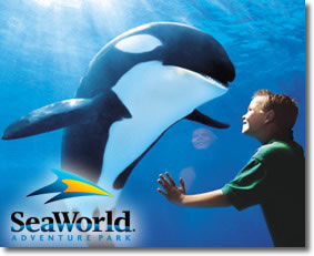 Seaworld | Boy & Killer whale